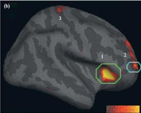 マインドフルネス脳科学